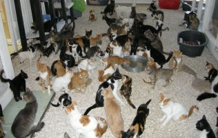 cat-shelter-2-20-3-2010.jpg - 50.47 Kb